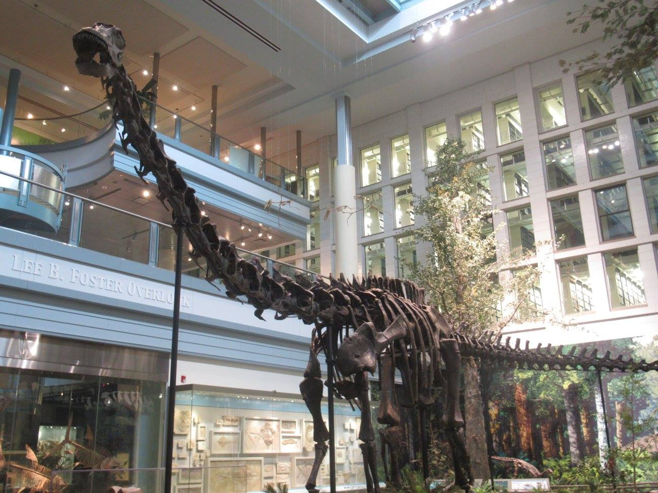 Carnegie Museum of Natural History | Big City Tales